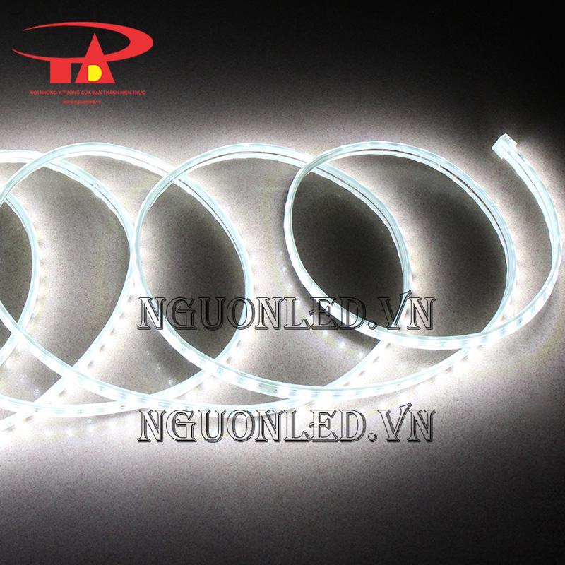 đèn led dây 2835 led đôi màu trắng