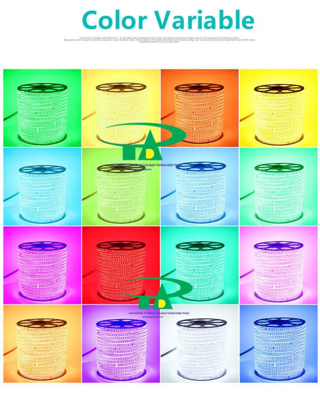 Phân phối sỉ đèn led dây 5050 màu xanh lá, dùng trang trí nội thất, chiếu sáng ngoài trời, hồ bơi, hắt trần thạch cao, quầy bar, karaoke
